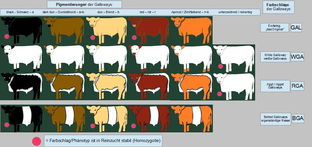 Galloway Gallolux Farbschlag